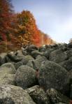 Скални феноемни в България